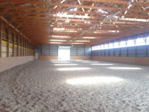Horse boarding available in Grimsby