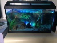 60l fishtank and gold fish