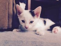 Sweet and playful kittens for sale
