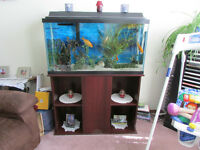 39 Gallon fish tank, stand, fish and other accessories included