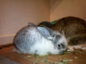 2 female bunnies