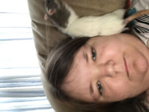 Two lovable Rats being rehomed