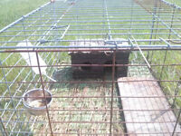 2 Cages for Rabbits or other small pets!