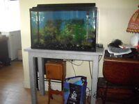 30 gal aquarium