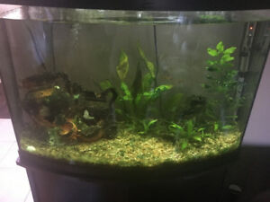 Stunning 36 gallon tank for sale- includes everything you need!