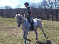 Experienced Event, Jumper, Gaming Pony For Lease