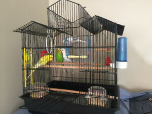 Four Budgies with large cage