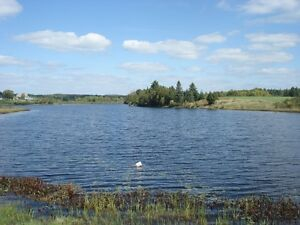WATERFRONT home on 1.33ac and 1180sq,ft one level floor Windsor Region Ontario image 5