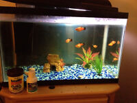 Fish tank with fish and decor