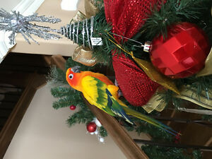 PRICE REDUCED  / Gorgeous Sun Conure