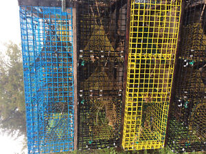 125 American lobster traps