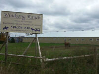 Up to 4 stalls available - with own or semi-private paddocks