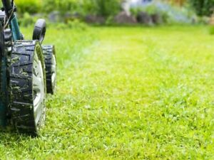 lawn cutting services same day