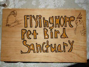FLYING HOPE PET BIRD SANCTUARY
