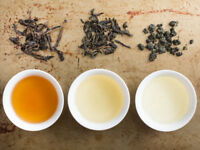 Looking to  hire web site manager for Tea Co.