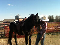 LADY looking for STAMPEDE Cash work..**ALL DAY every DAY***