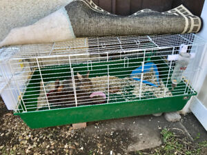 2 bunnies with cage for sale