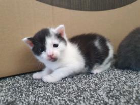 Gorgeous kitten SOLD