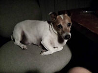 JACK RUSSEL LOST IN COURTRIGHT ?