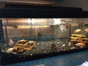 40 G Tank, Fish, Filter, Heater, Accessories and food
