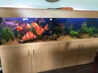 Large fish tank with 25-30 fish
