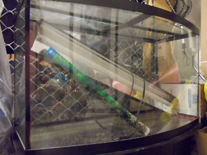 50 gallon bow friont fish tank with everything you need
