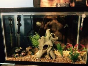 20 gallon fish tank/aquarium