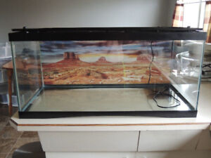 Leopard Gecko and Set-up