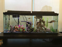 FREE 50 Gallon Fish Tank, Fish, Filters, Heater and Decorations.