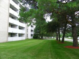 1 BR Apartment -AVAILABLE DEC 1 Kitchener / Waterloo Kitchener Area image 3