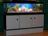 UNIQUE AQUARIUM 40 GALLONS, BASSE FAITE EN LONGEUR, IMPECCABLE !