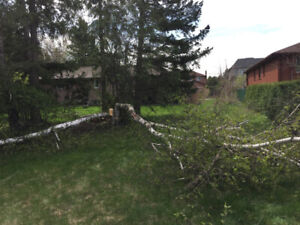 Tree Cutting, Tree Pruning, Tree Removal, Stump Grinding