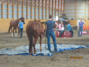 Horse Boarding at Coal Lake Stables Edmonton Edmonton Area image 6
