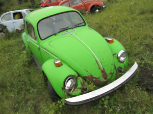 Beetle Collection For Sale