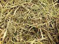 TIMOTHY HAY FOR SALE!