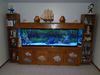 125 gal. aquarium, cabinet, fish and access. for sale.