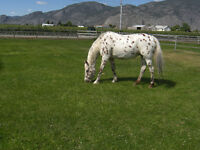 HORSE BOARDING and DOG KENNEL SERVICE in OSOYOOS