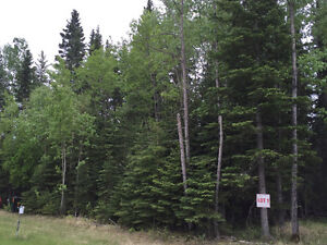 Large Fully Treed Candle Lake Lot Near 3 Beaches - Only $74900
