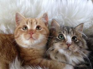 Adorable Christmas Kittens