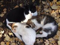 Friendly Farm Kittens