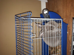 Sweet bunny with cage