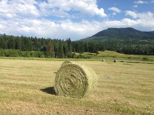 Grass Hay organic & local