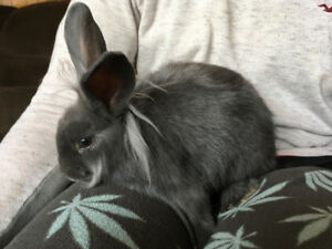 Looking to rehome abandoned rabbit I found