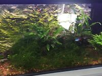 Fish + Plants + Bogwood