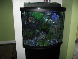 aquarium vitre courbe