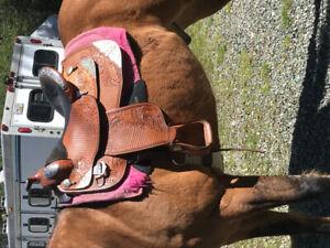 Dale Chavez show saddle