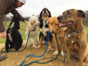 Reliable Dog Walking & Overnight Care