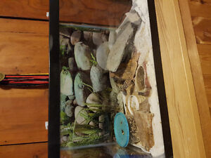 2 Leopard Geckos and Setup