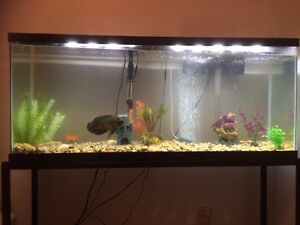 55 gallon fish tank and 1 year old tiger Oscar