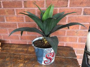 Plante artificielle - Aloès